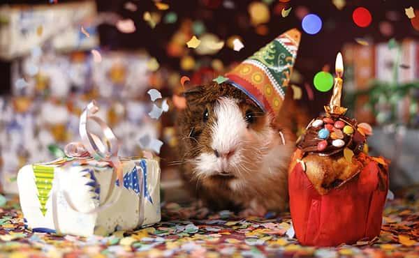 متن تبریک تولد , عکس پروفایل تبریک تولد , تبریک تولد رسمی و اداری